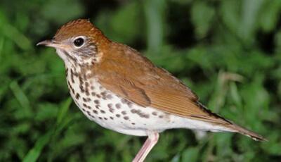 Bird in Bessie Benner Metzenbaum Park Habitat