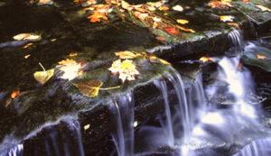 Big Creek Park Habitat