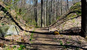 Big Creek Park Trails