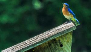 Bird in Burton Wetlands Nature Preserve