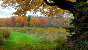 View of Burton Wetlands Nature Preserve in Autumn