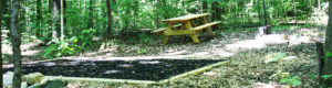 Chickagami Park Picnic Table