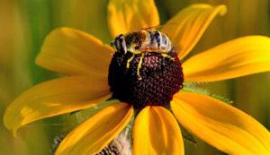 Bee on Flower in Orchard Hills Park Habitat