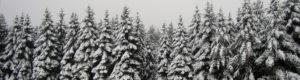Swine Creek Reservation Park in Snow