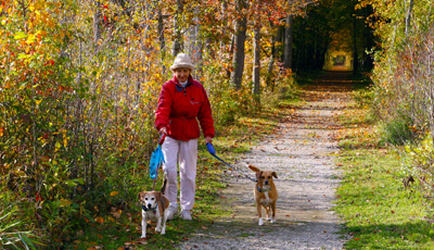 Woman Walking Dogs in The Rookery Park