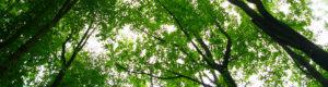 Whitlam Woods Park