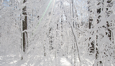 Whitlam Woods Snowcovered Trails