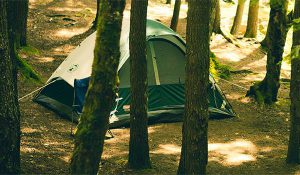 Tent Surrounding by Trees