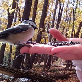 Bird in Hand Eating Seeds