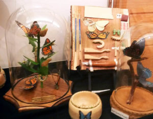 Butterfly Species on Display at Art Show